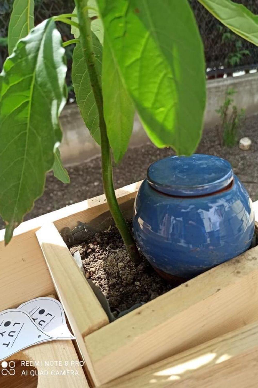 planta-avocado-sistem-lotuya