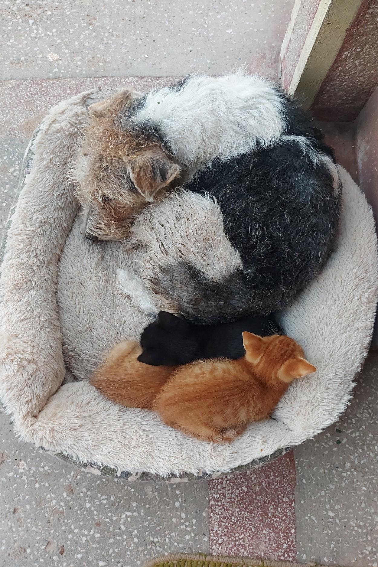 Tinerii împart casa cu trei pisici adoptate din sat, dar și cățelul lor