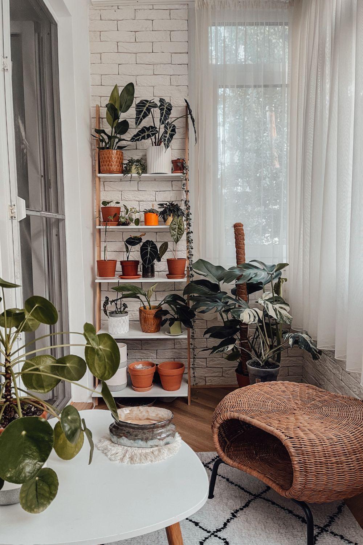 plante_balcon